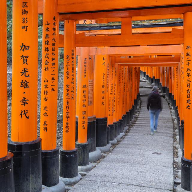 """Fushimi Inari Taisha shrine and torii gates"" stock image"