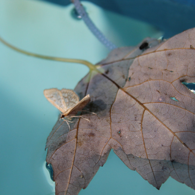 """brown moth on a brown leaf"" stock image"