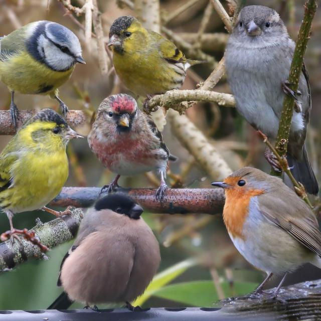 """British Garden Birds"" stock image"