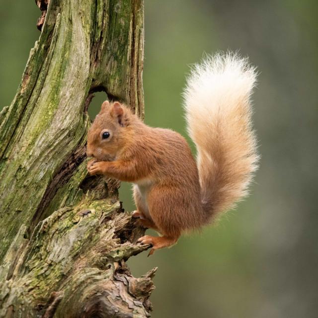 """Tree climber"" stock image"