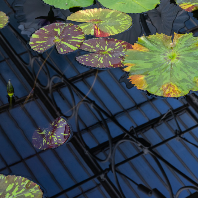 """Water Lily House, Kew Gardens"" stock image"