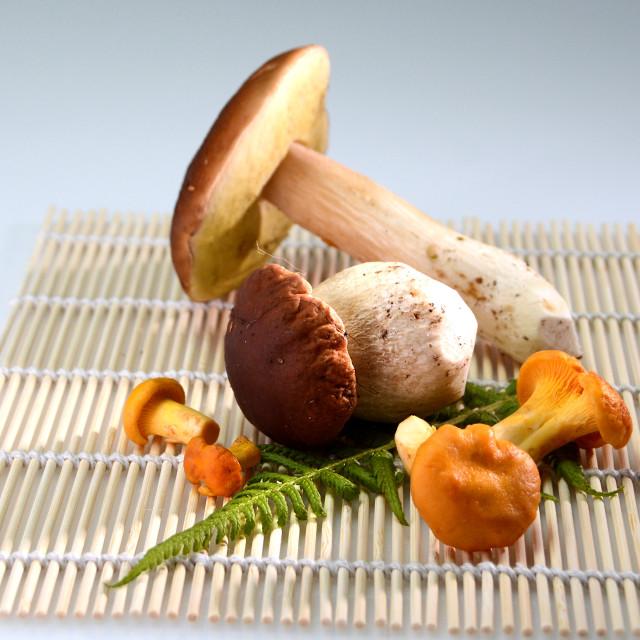 """wild forest mushrooms"" stock image"