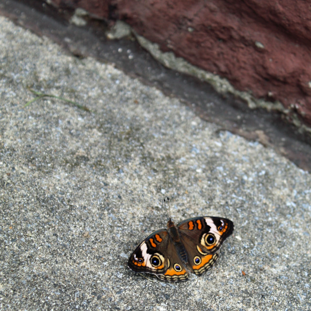 """butterfly on the sidewalk"" stock image"