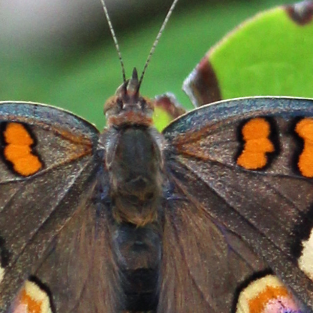 """butterfly close up"" stock image"