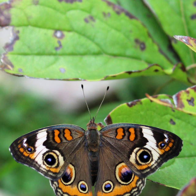 """butterfly in the garden"" stock image"