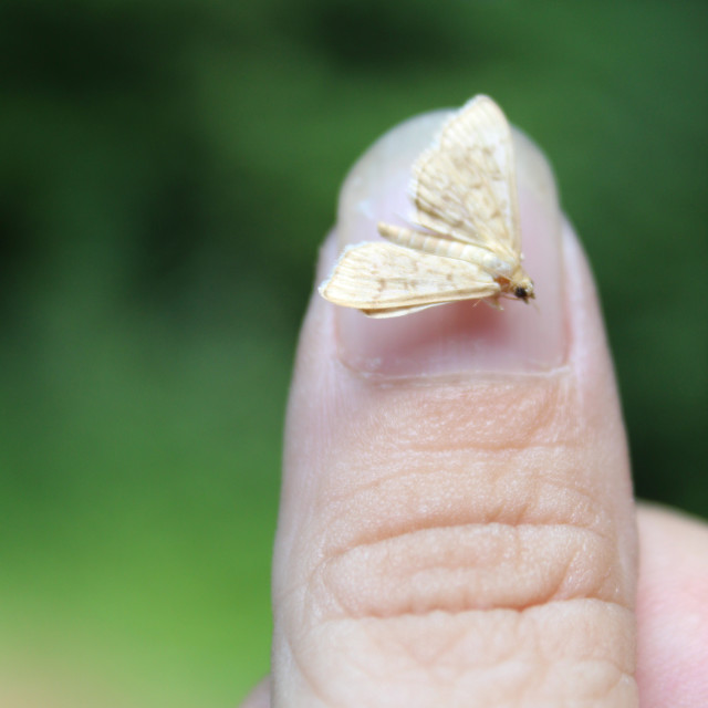 """moth nail art"" stock image"
