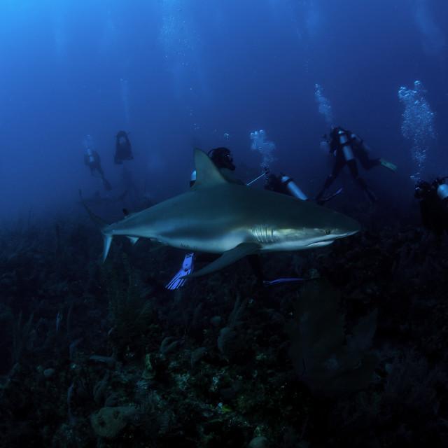 """""""Mergulhadores e um Tubarão"""" stock image"""