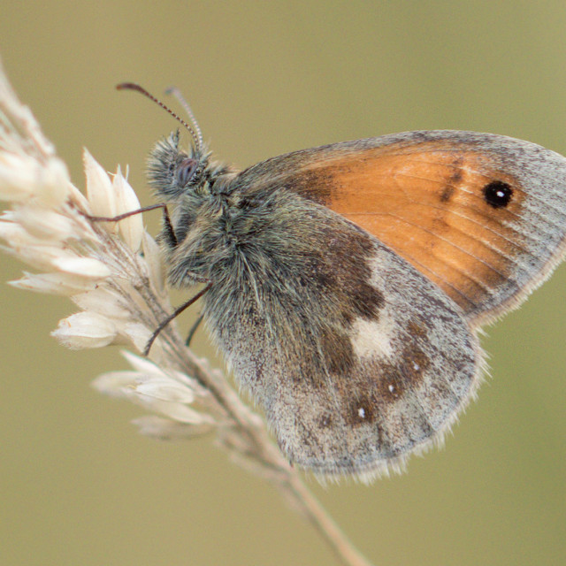 """4B9A7308 Small Heath 190804 FNGY"" stock image"