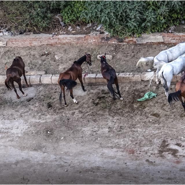 """Parada de caballos"" stock image"