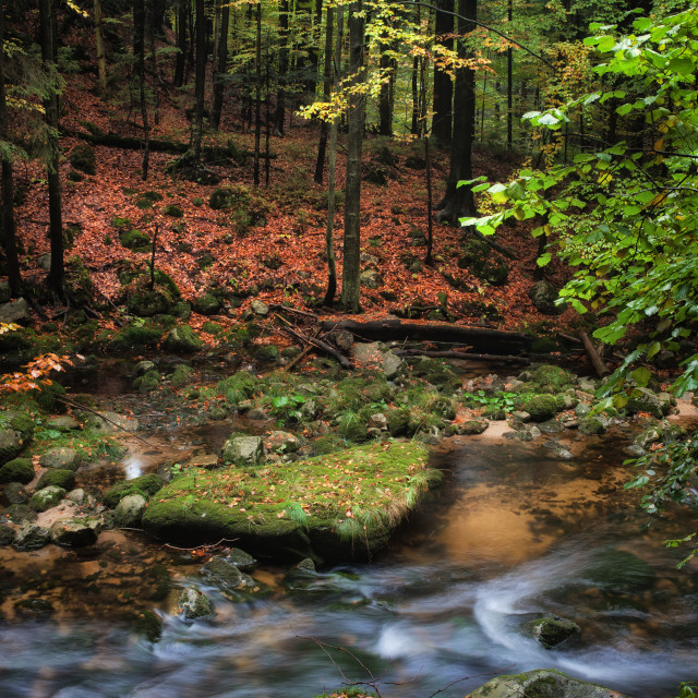 """""""Small Creek in Autumn Mountain Forest"""" stock image"""