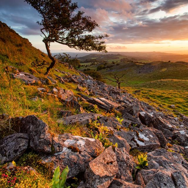 """lone tree sunset"" stock image"