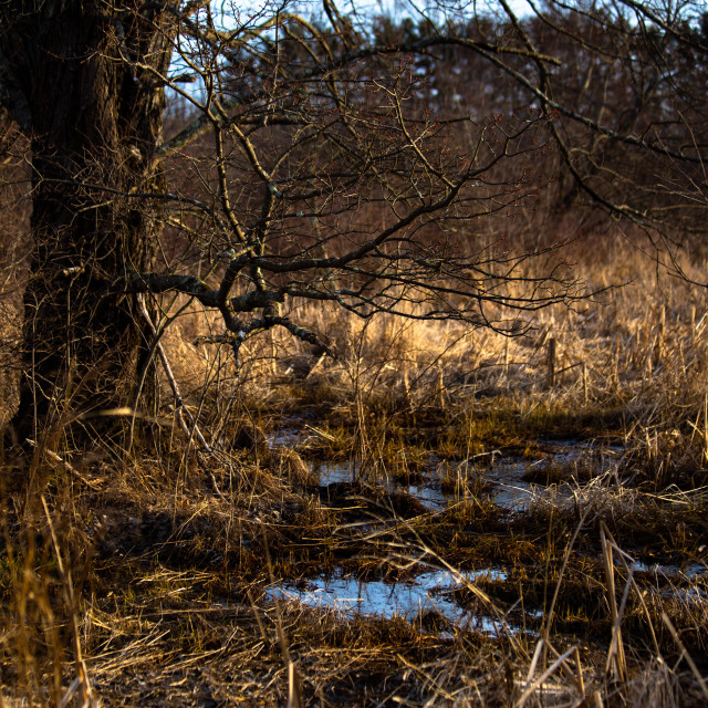 """""""Wetlands Biome in Connecticut, USA"""" stock image"""