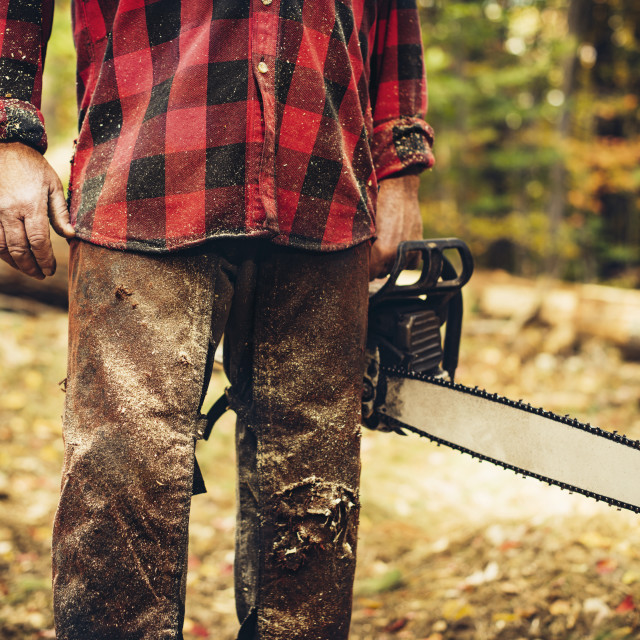 """""""Midsection of lumberjack holding chainsaw in forest"""" stock image"""