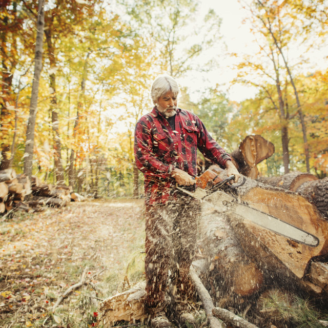 """""""Lumberjack cutting log with chainsaw in forest"""" stock image"""