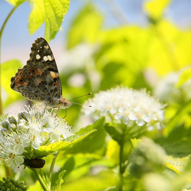 """Small nymph butterfly in my garden on the interesting background looks beautiful"" stock image"