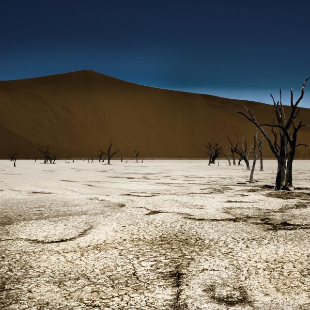 """""""dead vlei in the namib desert"""" stock image"""