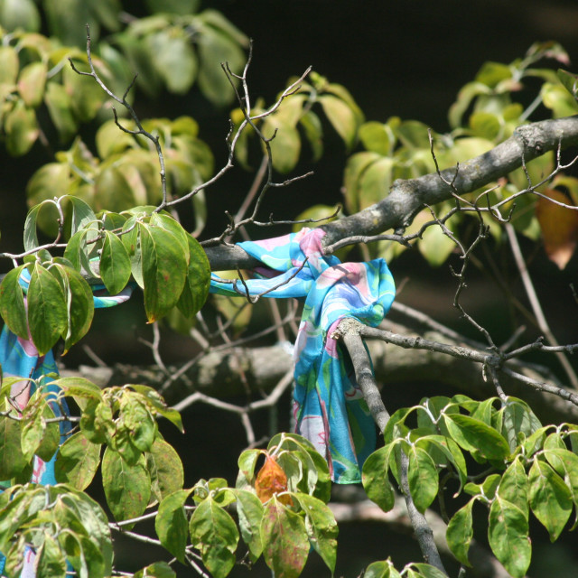 """""""blue scarf in a tree"""" stock image"""