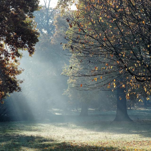 """""""Vincennes park"""" stock image"""