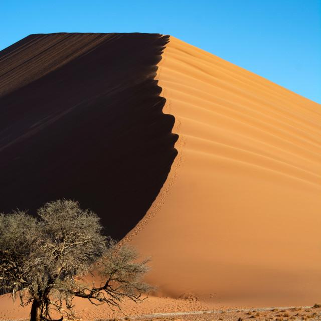"""the namib"" stock image"