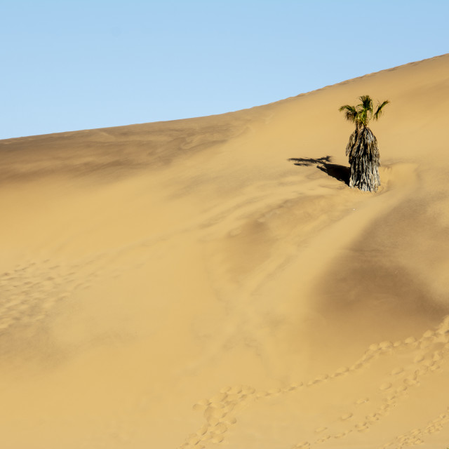 """the namib desert"" stock image"