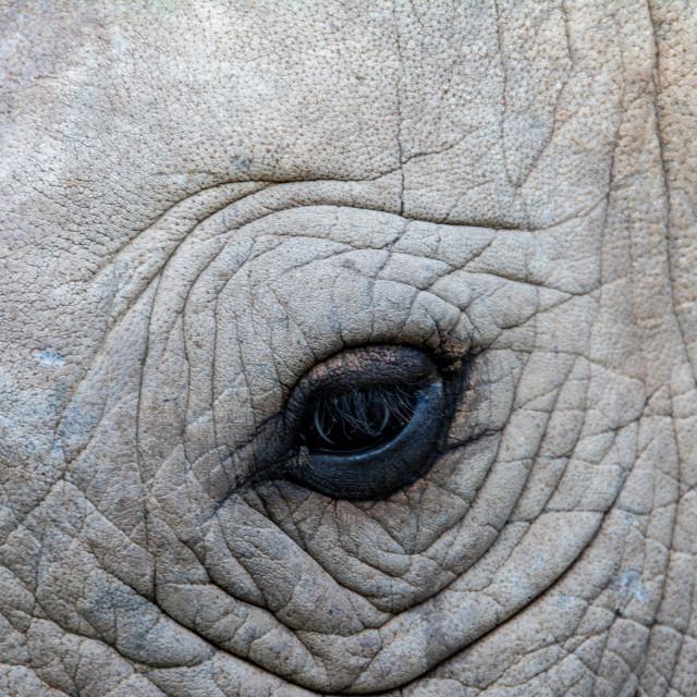 """african wildlife"" stock image"
