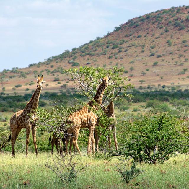"""driving damaraland in namibia"" stock image"