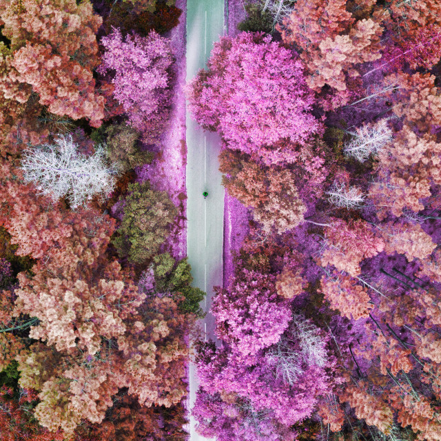 """""""View of a forest road from above"""" stock image"""