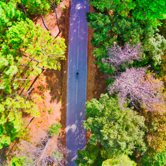"""""""A forest road view from above"""" stock image"""