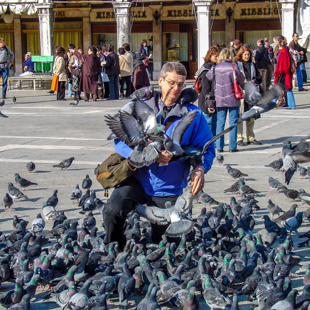 """""""Man With Pigeons In San Marco Square In Venice"""" stock image"""