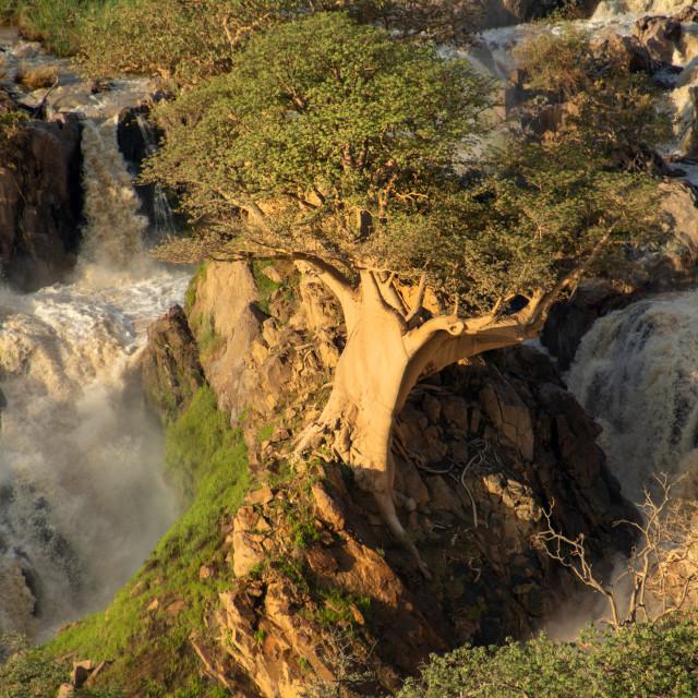 """epupa falls"" stock image"