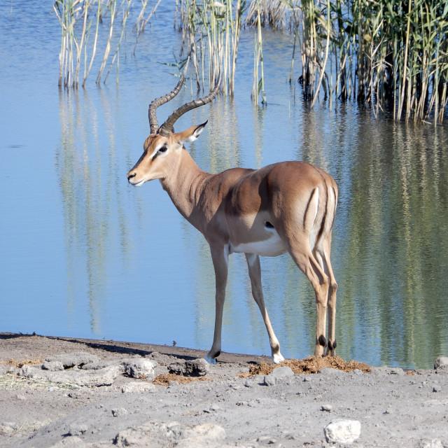 """spotting african wildlife in etosha"" stock image"