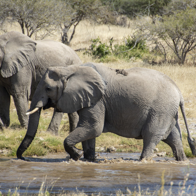 """""""spotting wildlife at etosha namibia"""" stock image"""
