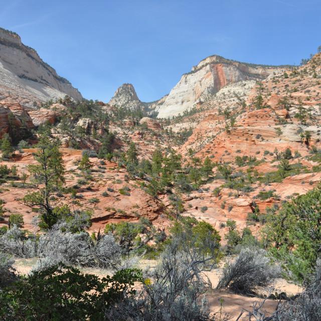 """zion canyon nationalpark"" stock image"
