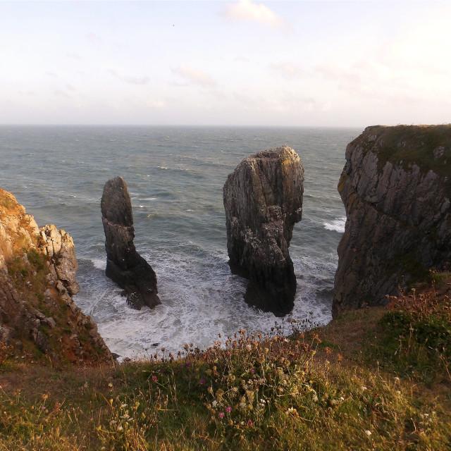 """Elegug Stack Rocks on Pembrokeshire coast"" stock image"