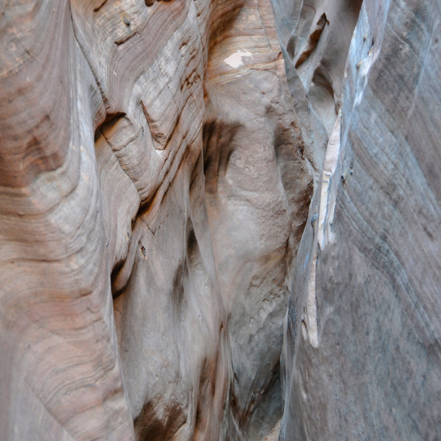 """""""zebra slot canyon"""" stock image"""