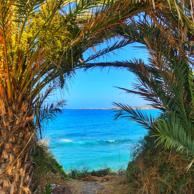 """Palm trees framing the Mediterranean Sea"" stock image"