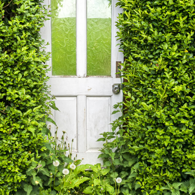 """A white door in a hedge"" stock image"