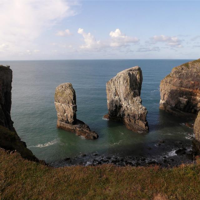 """Elegug Stack Rocks in Pembrokeshire"" stock image"