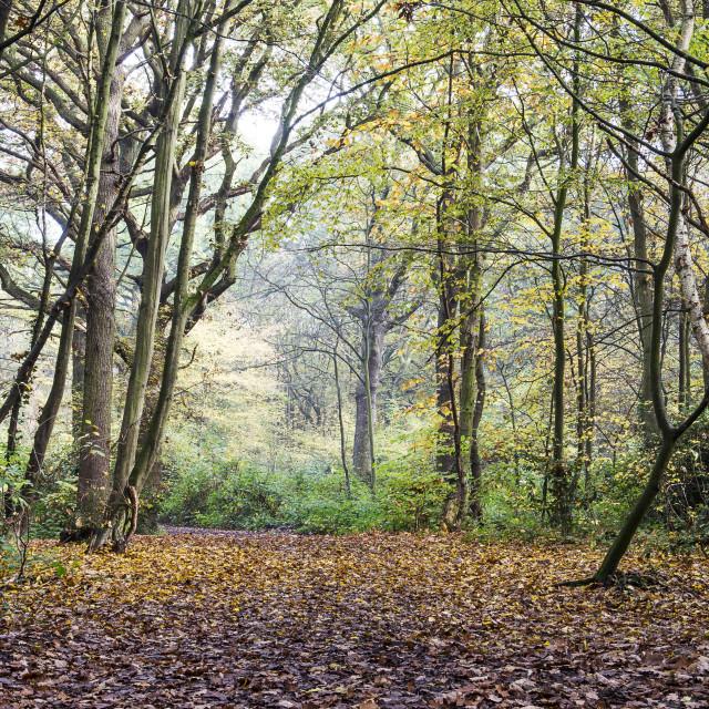 """""""Woodland Colours"""" stock image"""