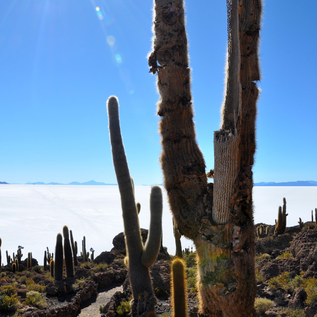 """""""travelling bolivias andes region"""" stock image"""