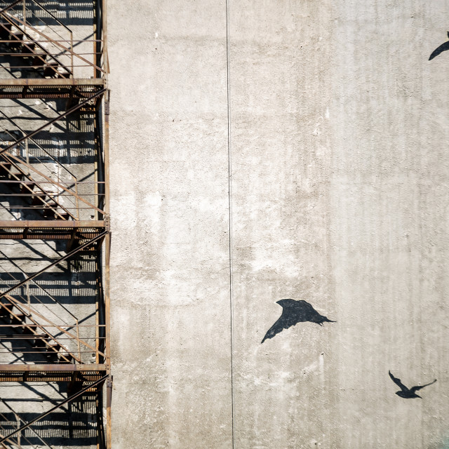 """Stairs and birds"" stock image"