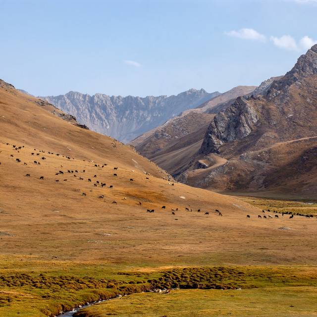 """""""Roaming animals in a Kyrgyz Landscape"""" stock image"""