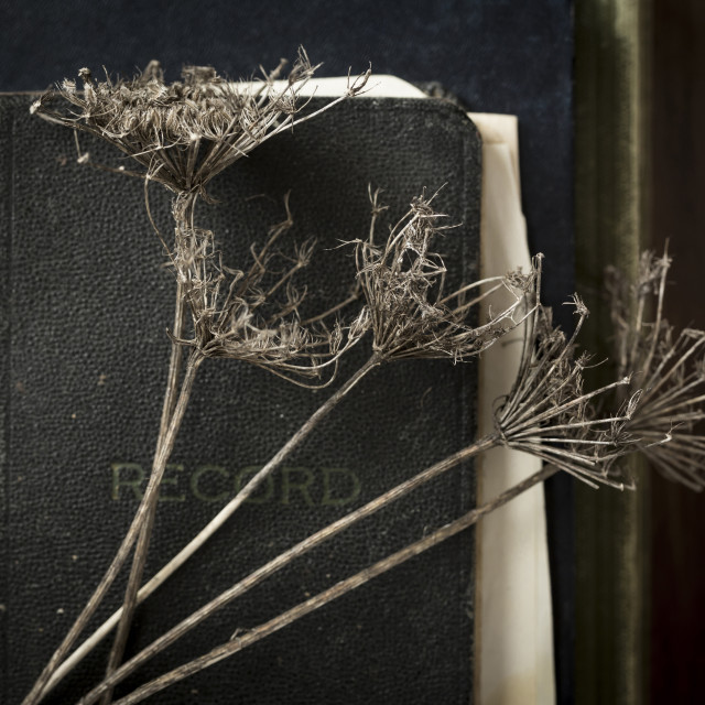 """""""Close-up of dry plants with diary and books on wooden table"""" stock image"""