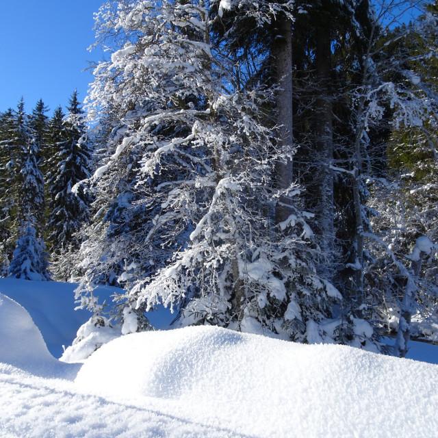 """winter wonderland"" stock image"