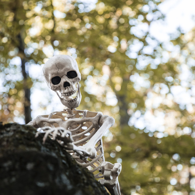 """""""Low angle view of human skeleton on rock against trees"""" stock image"""
