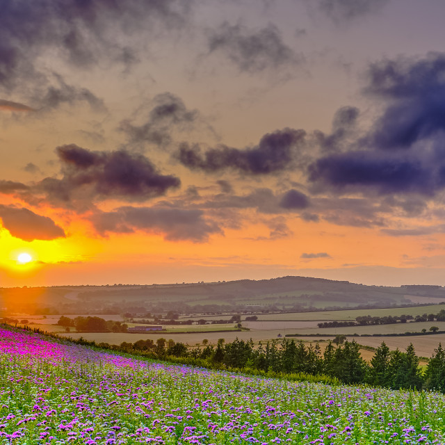"""Summer sunset over the Meon valley towards Beacon Hill with a fi"" stock image"