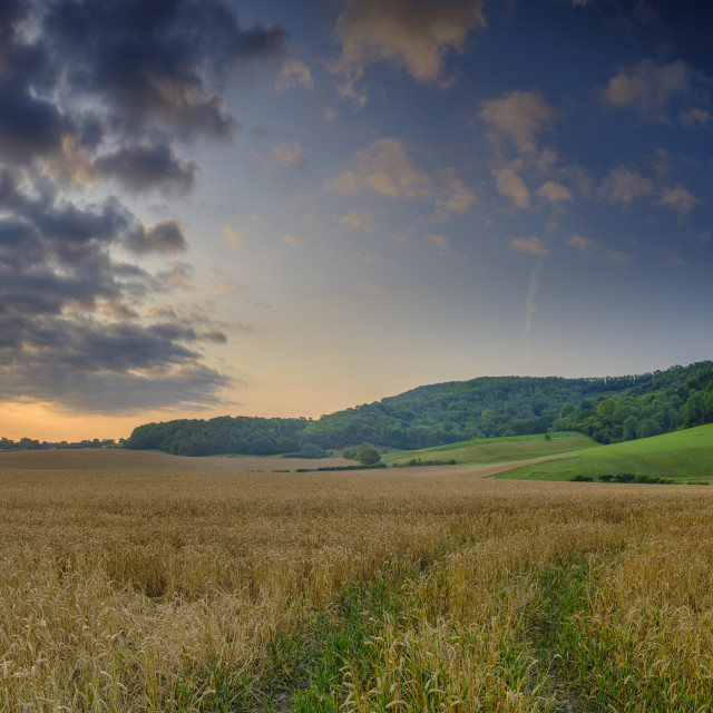 """Summer sunrise on the South Downs near Didling, West Sussex."" stock image"