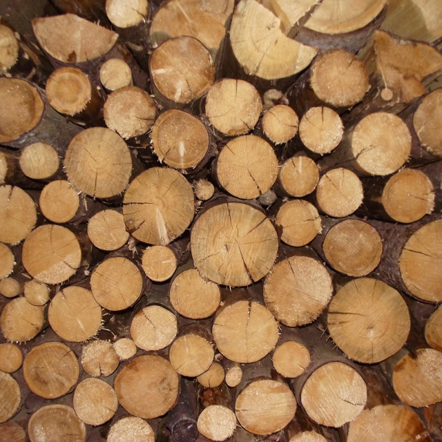 """Sawn wooden logs"" stock image"