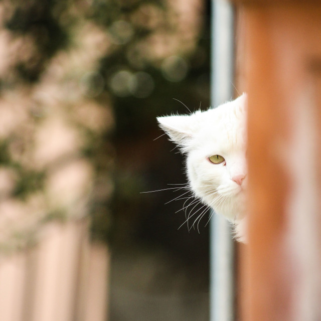 """""""The princess - playing hide and seek"""" stock image"""