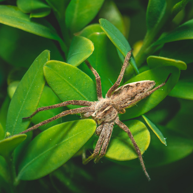 """""""Brown spider is perched on the plant with many small green leaves"""" stock image"""